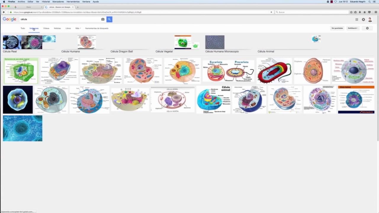 Resultado de imagen para imagen interactiva de zoologia