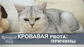 РВОТА розовым у кошки: отравление, непроходимость?