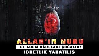 ALLAH Nuru Ey Adem oğulları Çoğalın Büyük Evrim Yalanı! İbretlik Yaratılış!
