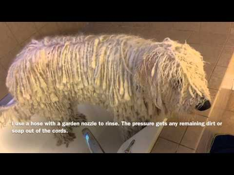 Komondor Bath