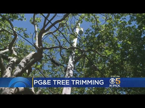 pg&e-set-to-trim-trees-more-severely-in-marin-county-for-fire-safety