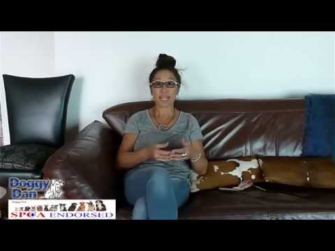 Doggy Dan Review-Dog Training DVD Reviews-Doggy Dan Online Dog Trainer Review-Doggy Dan Reviews