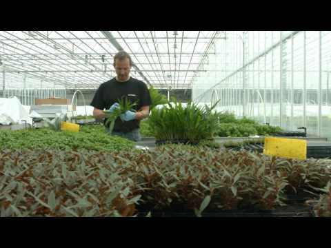 Tropica Aquarium Plants - The Movie (2017 edition)