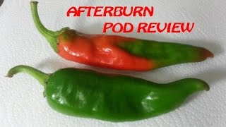 X-hot New Mexico Hatch Chile | Afterburn Pod Review