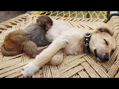 Top 10 Dogs and Monkey Pals