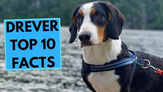 Drever  TOP 10 Interesting Facts