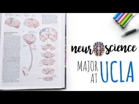 My UCLA Major: Neuroscience || Lauren Dinh