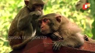 Story of Odisha Ep 142 18 Mar 2018   Baragarh, Odisha   ଚାଲ ବୁଲିଯିବା ବରଗଡ଼ - Odisha Tourism