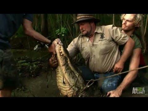 Jumping on Big Bull's Back | Gator Boys