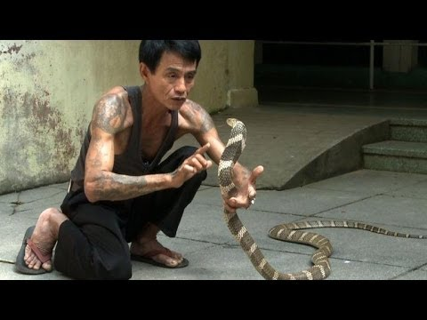 Death in the long grass: Myanmar's snake bite menace