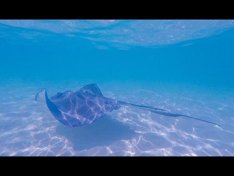 Stingray City and Starfish Point Adventure at Grand Cayman