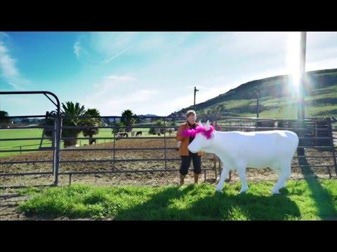 CowParade SLO County: Phyllis Madonna - Do the Moo