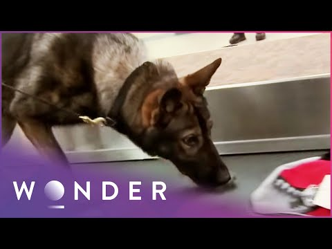 Dog Finds Drugs In Airplane | K9 Mounties S1 EP5 | Wonder