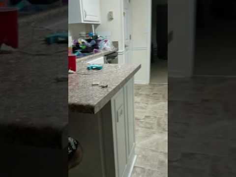 Dog tries an extreme sour warhead