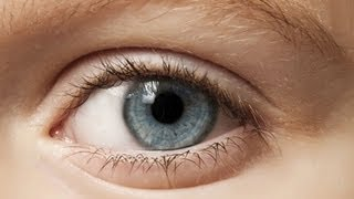 Das Auge - Trailer Schulfilm Biologie