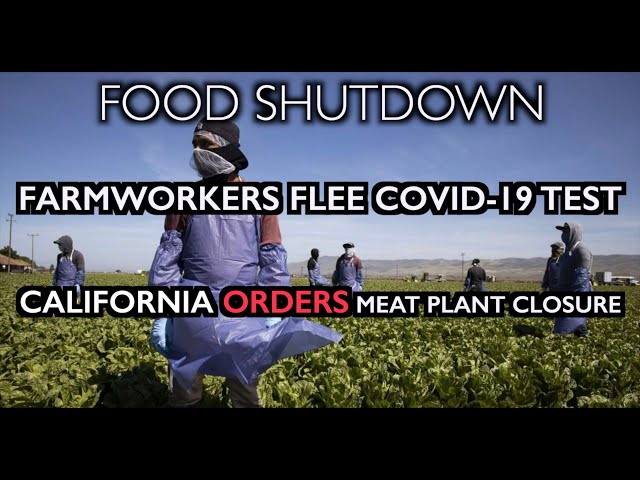 FOOD SHUTDOWN: Farmworkers flee COVID-19 tests - CA Orders Meat Plant Closure