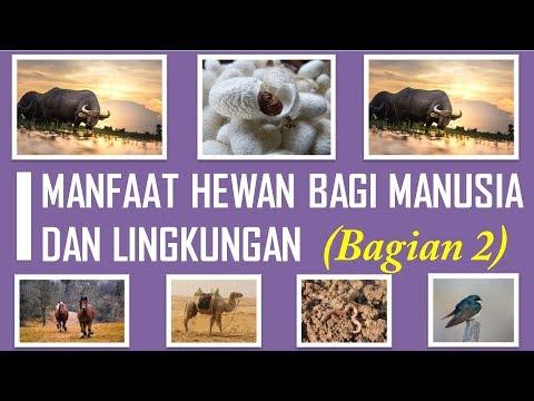 910 Koleksi Gambar Hewan Dan Manfaatnya Bagi Manusia HD Terbaik