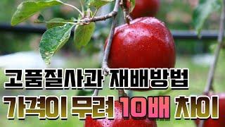 [귀농 10년차] 사과나무 잘 키우기, 고품질사과 재배…