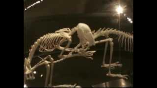 Esqueleto De Una Rata Youtube