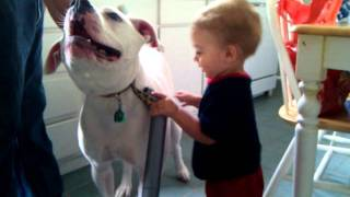 Baby Vacuums Bulldog! Cute!