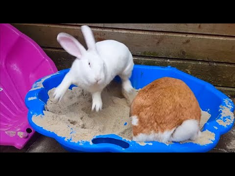 Mature sand with the rabbit