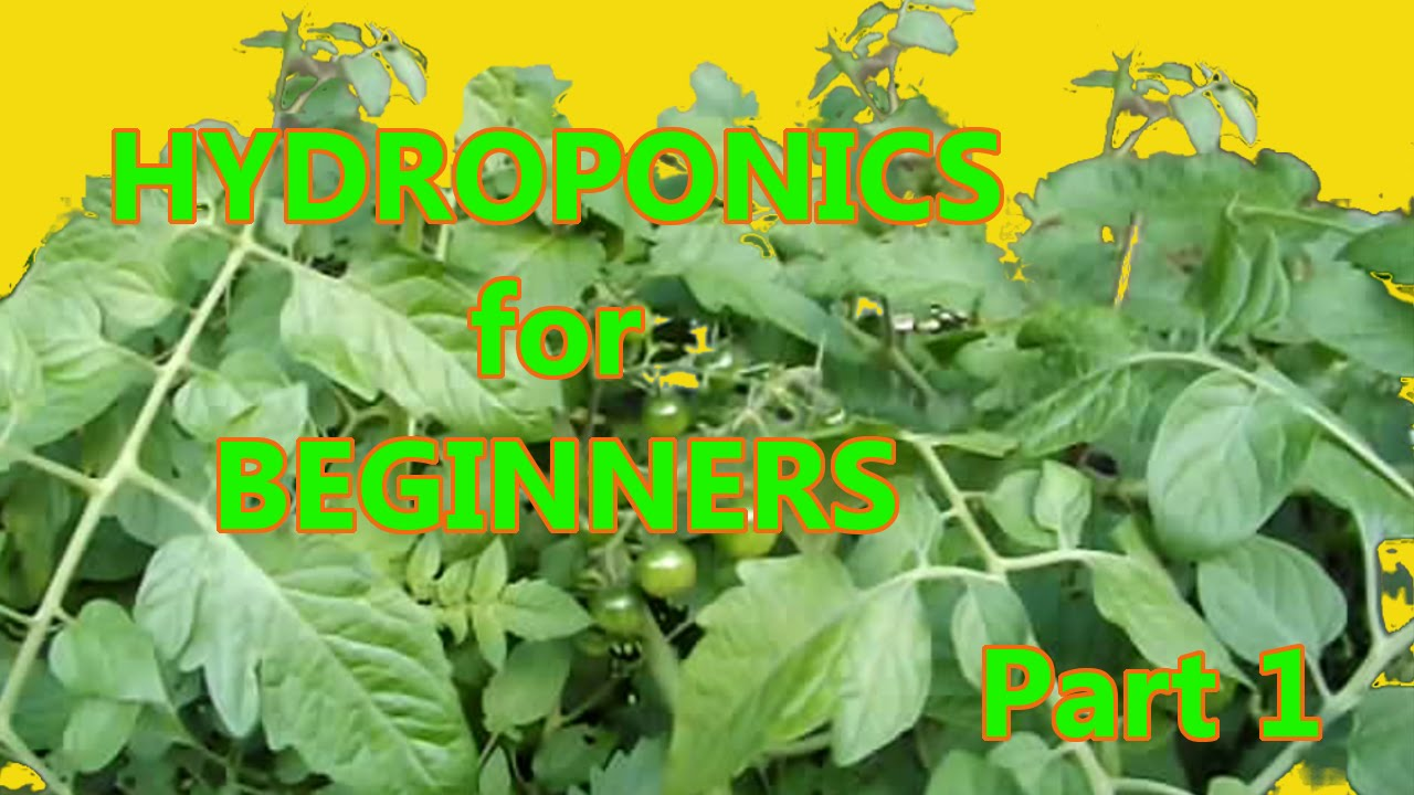 Hydroponics for Beginners: DWC homemade DIY Under $50 Part ...