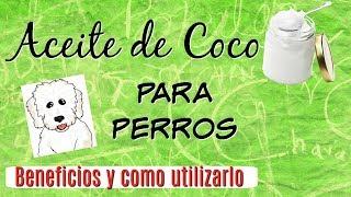 Aceite de Coco para Perros: Aseo, Receta, Antipulgas, Curaciones, CDT I Lorentix