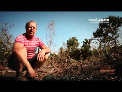Zambia deforestation - Charcoal Burners