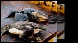 Oil Spill of 2010 -2 Thumbnail
