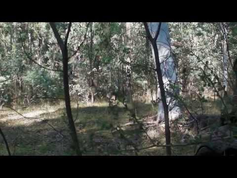 Bow Hunting Australia