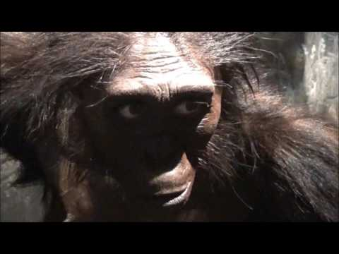 Monkey Monsters and Skeletons - Smithsonian Museum of Natural History