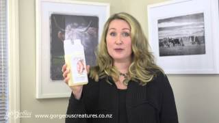Sheepskin Woolwash Shampoo Introduction
