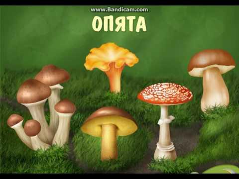 Развивающий мультфильм учим названия грибов!!!