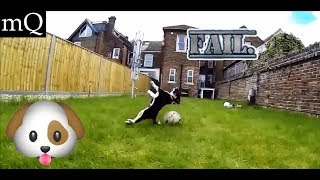 50 Dogs Failing For Being Dogs! | Dog fail compilation 1