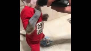 Смешное видео про обезьян четырёх секундная😂