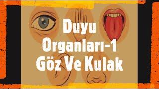 6. Sınıf Duyu Organları Konu Anlatımı