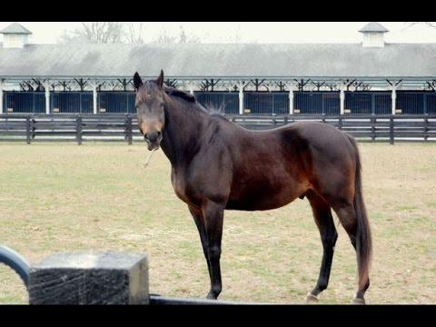 Visiting the Kentucky Horse Park
