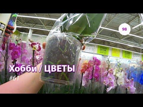 98#61 / Хобби-Цветы / 14.09.2018 - ЛЕРУА МЕРЛЕН (ТК ТРОЙКА). ОРХИДЕИ + ВАЗЫ