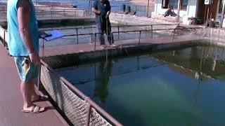 Caviar Beluga Réserve - Boite Origine vidéo