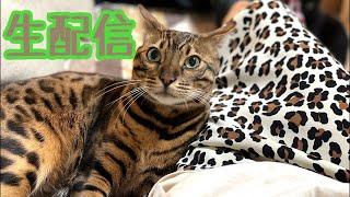 【ランチ生配信5/4】ポカポカ休日は猫見ながらゴロゴロ過ごしませんか?生配信