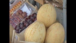 «Торпеда» или «колхозница»: как выбрать вкусную и спелую дыню?