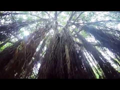 Short break in Western Ghats - First GoPro Compilation