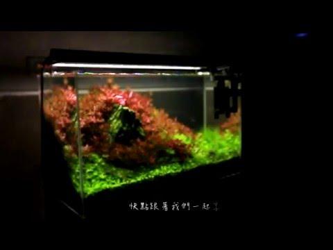 ISTA 伊士達高演色專業植物造景燈,2016年全新上市!