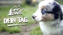 Die wichtigsten Tage in deinem Leben - Camp Canis Motion