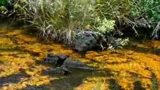 Golden Pools of Keawaiki