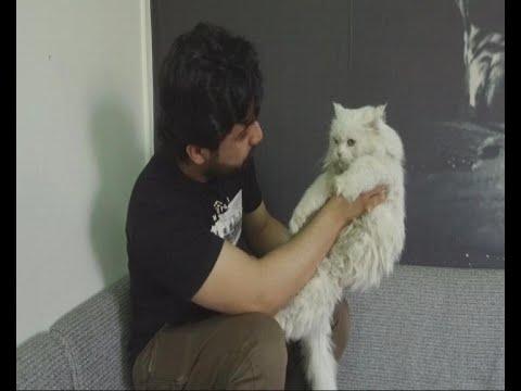 هكذا انقذ الشاب السعودي هذه القطة  - نشر قبل 10 ساعة