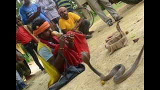 जानिए बिन से क्या रिश्ता है सांपो का, क्या बिन बजाने से सांप नाचता है। Cobra snake flute music