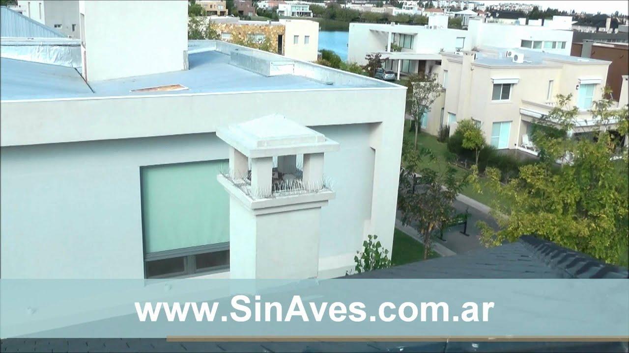 C mo erradicar palomas del techo de una casa youtube for Techos para casas economicos precios