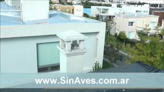 Cómo erradicar palomas del techo de una casa