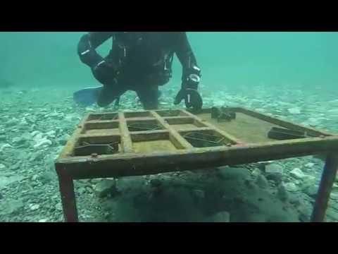 Plonge Flintkote Dive